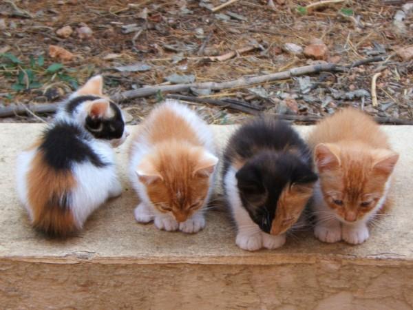 Ddc1d48cf6159b9d7159bc474957b4b8bb1d02f5 kittens